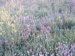 flowers in field
